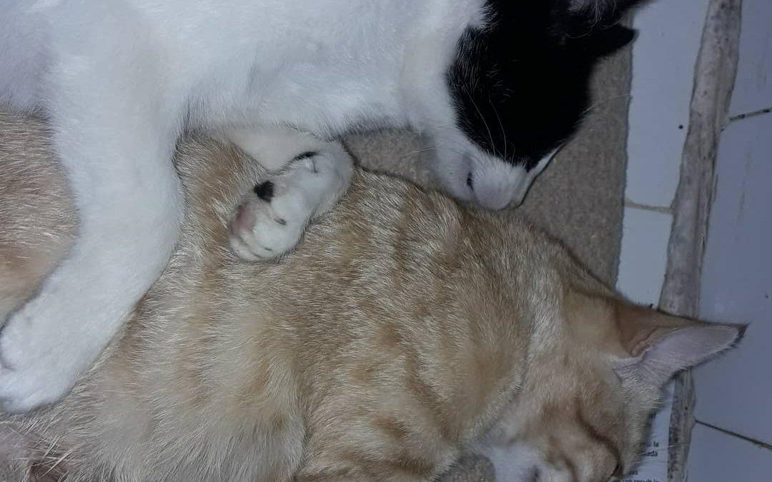 Éstas dos preciosidades ya han sido esterilizadas y ahora están en el hospital r…